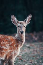 ways to keep deer out of the garden