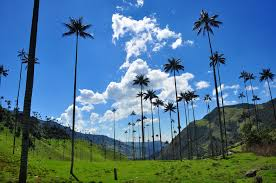 photo essay natural wonders in travel blog  cocora valley nto