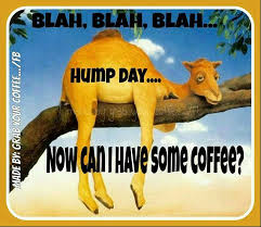 Good Morning Wednesday Funny Images Top Colection For Greeting And