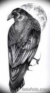 фото тату ворон от 15092018 204 Raven Tattoos Tatufotocom