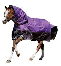 Best Rated In Horse Blankets Sheets Helpful Customer