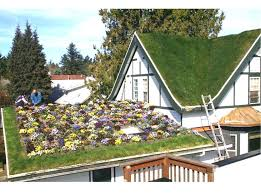 how to build a green roof transform your house into a green utopia smooth decorator build how to build a green roof