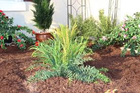creating a drought proof landscape part 4 incorporate artificial plants and trees