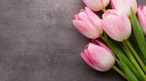 1920X1080 Tulips Wallpapers - Top Free ...