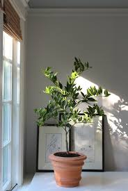 Best Grow Light For Citrus Tree The Truth About An Indoor Lemon Tree Hint It Belongs