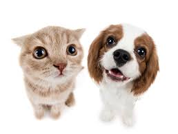 find quality health insurance for your furry friends fill out the form below to get a free quote through safeco dog