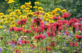 hummingbirds with this garden plan