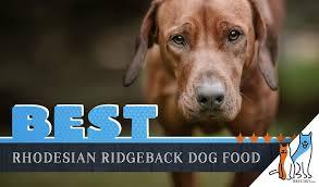 6 Best Rhodesian Ridgeback Dog Foods With Top Puppy Senior