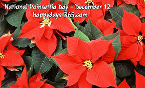 National Poinsettia Day - December 12, 2018 | Happy Days 365