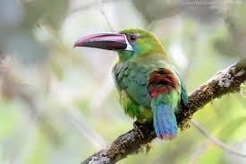 南国の鳥の動物壁紙