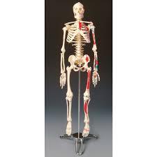 Budget Big Tim Painted Skeleton