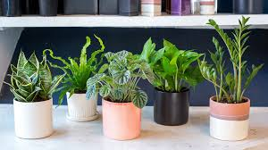 House Plants Low Light Requirements Best Low Light Office Plants Office Cubicle Today Indoor