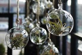 air plant glass bubble, air plant glass bulbs, and air plant glass globe  image