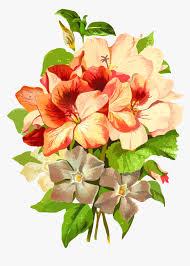 flowers name hindi english hd png