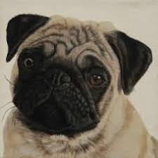 A Prettier Pug - <b>dog oil</b> painting | Art, photos and <b>oils</b> | <b>Dogs</b>, Pugs ...