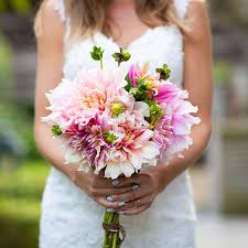 dahlia bulbs dinnerplate bridal