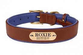 brass buckle leather dog collar personalized nameplate laser engraved small medium large soft padded purple