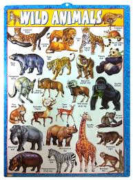 Buy Set Of 5 3d Emboss Kids Learning Wall Charts Flowers