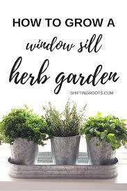 an indoor herb garden from seeds