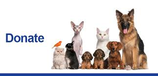 animal shelter donate. Brilliant Donate SPCASiteBannersDonate  Dog Cat Pet Adoption Animal Shelter In Buffalo Throughout Donate C