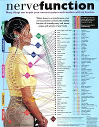 Spinal Nerve Chart Chart Of Chiropractic Subluxation