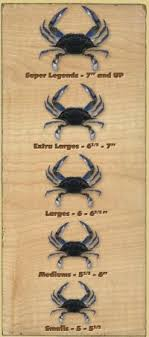 Snow Crab Cluster Size Chart Crab Legs Stock Images