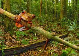 Редкие растения и существа Южной Америки ФОТО НОВОСТИ Редкие растения и существа Южной Америки