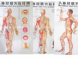 Acupuncture Facelift Points Chart Free Shipping Color Body Acupuncture Points Chart Meridian Points Side Front Back Chinese English 7pcs Set