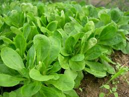 Image result for green vegetables