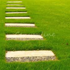 tall green grass field. Detail Image Tall Green Grass Field