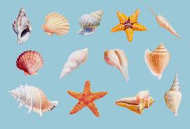 Premium Vector | Hand drawn shellfish and <b>starfish on white</b> ...