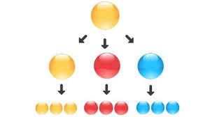 Cell Potency Totipotent Vs Pluripotent Vs Multipotent Stem