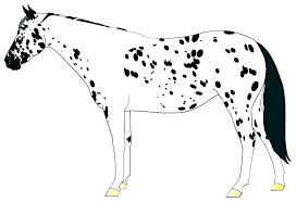 real horse coloring pages l4954 horse color pages combined with coloring pages of a horse spirit