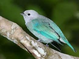 Robbie Bird (@BirdybirdRobbie)   Twitter