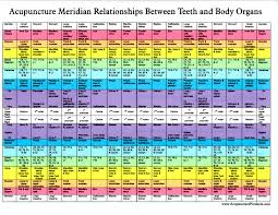 Tooth Organ Meridian Chart Interactive Tooth Chart Long Island Holistic Dentist