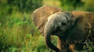 beautiful hd wallpapers of animals. Contemporary Animals Beautiful And Cute Animals Wallpaper 39 To Beautiful Hd Wallpapers Of Animals L