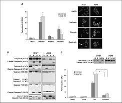 Proteasen) hemmen und damit den abbau von proteinen verhindern können. Nelfinavir A Lead Hiv Protease Inhibitor Is A Broad Spectrum Anticancer Agent That Induces Endoplasmic Reticulum Stress Autophagy And Apoptosis In Vitro And In Vivo Clinical Cancer Research