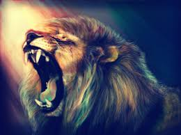 lion wallpaper and background image 1282x956 id 436421 wallpaper abyss