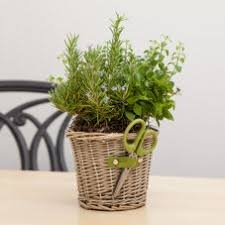 Plant Gifts For Every Holiday  Christmas Plants  GivingPlantscomChristmas Gift Plants