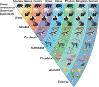 Biodiversity Classification Chart Topic 5 3 Classification Of Biodiversity Amazing World Of