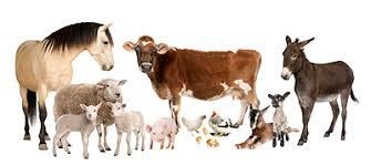 County Fair Animal Science Club Info — Carroll County VA Agricultural Fair