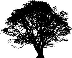 Tree Silhouette Oak Clip art - Black Trees Cliparts png download ...