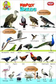 Hindi Birds Name Chart 54 Name Of Love Birds In Hindi In Hindi Birds Of Love Name