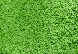 green carpet texture. Fluffy Green Carpet, Texture, Background. Stock Photo - 6028124 Carpet Texture E