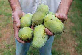 Lemon Trees In North Carolina  HunkerFruit Trees That Grow In Nc