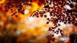 Autumn Wallpapers Free Autumn Desktop ...