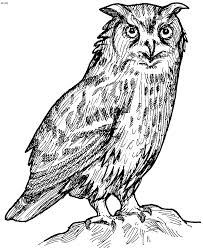Small Picture owl coloring pages free printables tthe huns yellow pages free