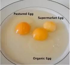 Egg Yolk Colour Chart Whats The Truth About Egg Whites Vs Egg Yolks Quora