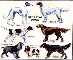 dog breed chart with names dog breed chart with names photo 22 species of dogs and their names species of dogs and their names