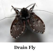 Flies In Our Bathroom  DoItYourselfcom Community ForumsSmall Flies Around Kitchen Sink